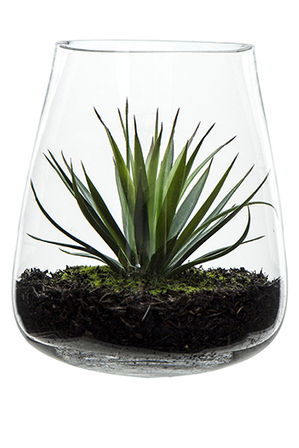 Rogue - Needle Agave In Vase