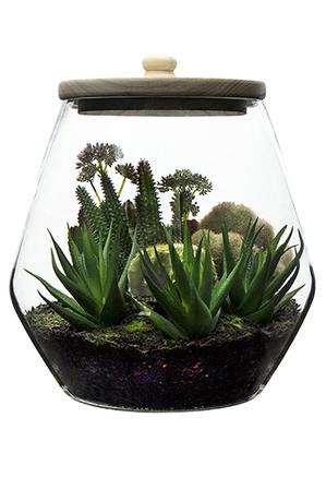 Rogue - Cactimx-Sherwood Jar