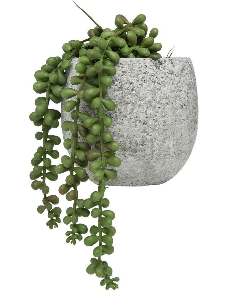 Hanging Pearls In Tub Pot 13cm Grey image 1
