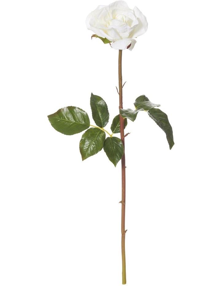 Dutchess Rose Stem White image 1