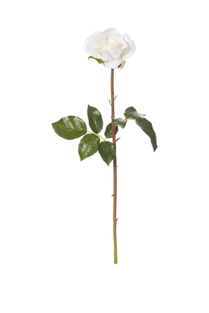 Rogue - Dutchess Rose Stem White