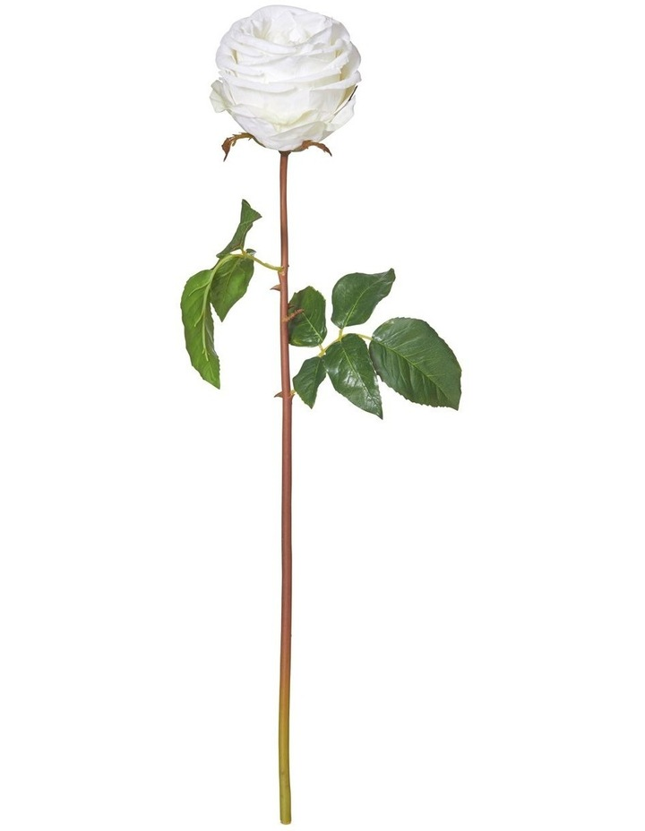 Ecuadorian Rose Stem White image 1