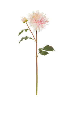 Rogue - Delbard Dahlia Stem Soft Pink