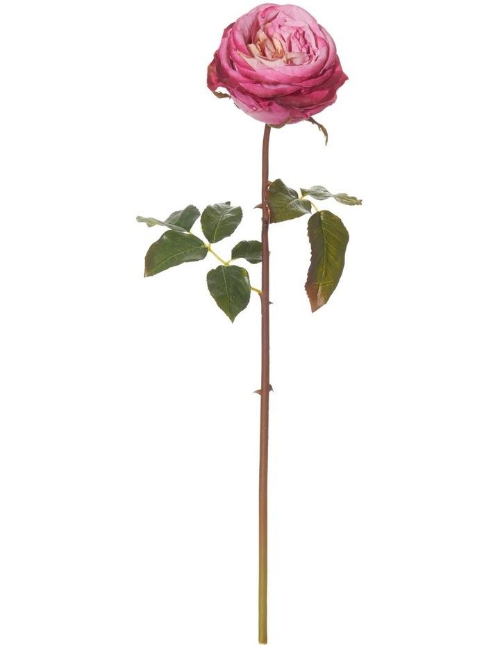 Ecuadorian Rose Stem Mauve image 1