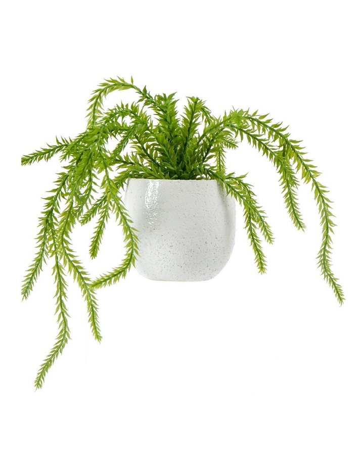 Rogue Hassle Fern In Tub Pot White image 1