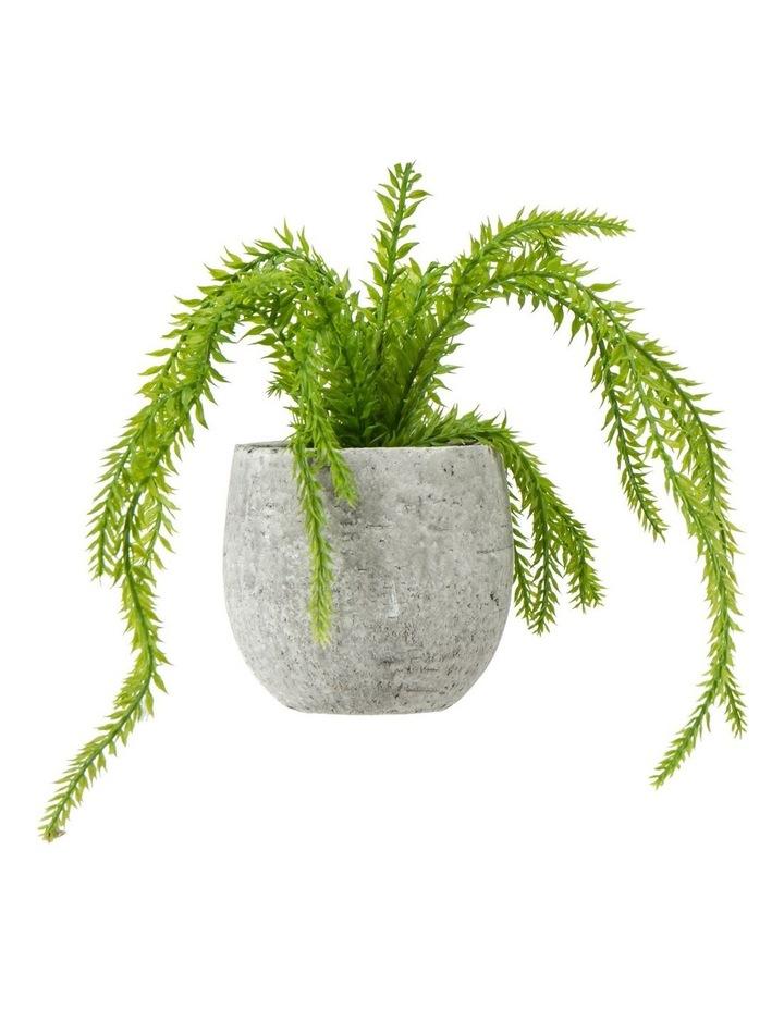 Hassle Fern InTub Pot Grey image 1