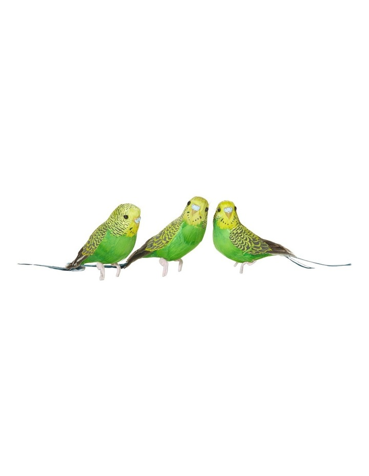 Green/Yellow Budgies image 1
