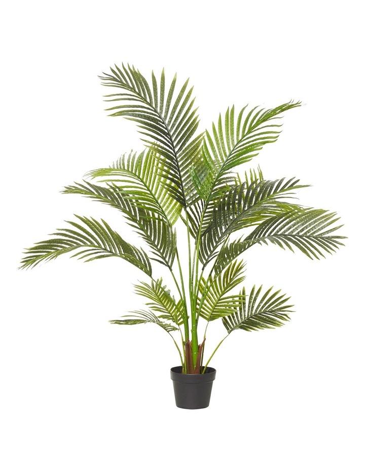 rogue areca palm 90x120cm myer