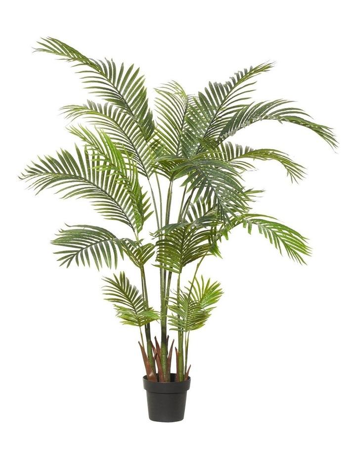 Areca Palm 110x170cm image 1