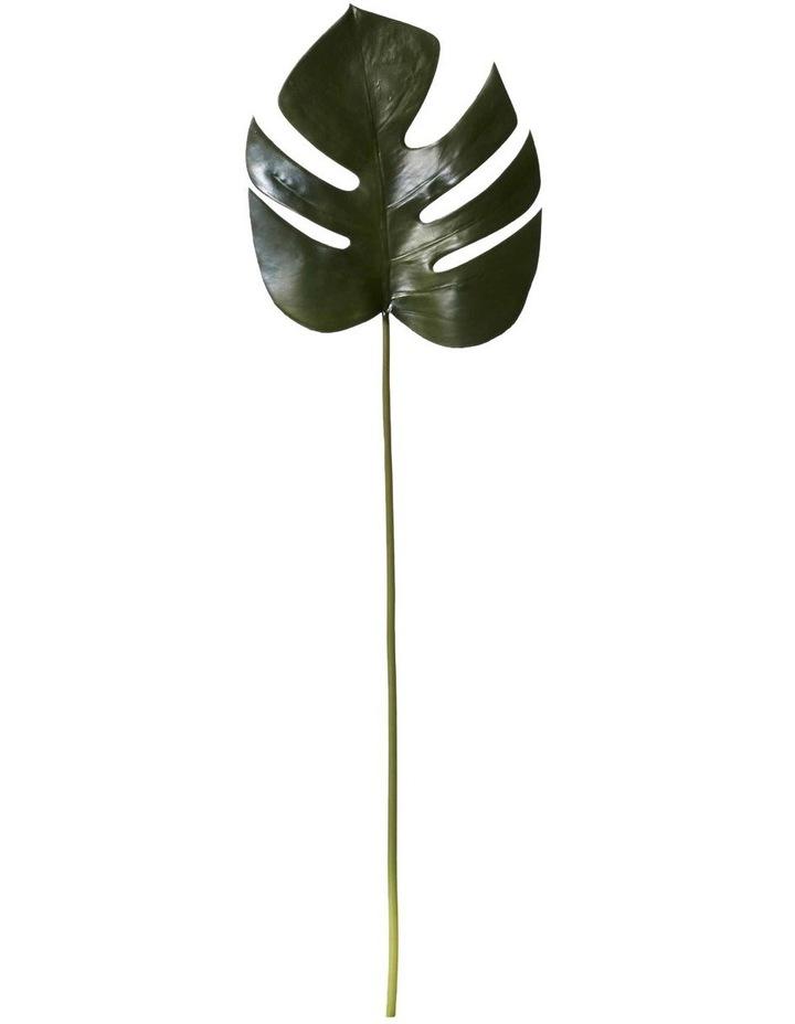 Monsteria Leaf image 1