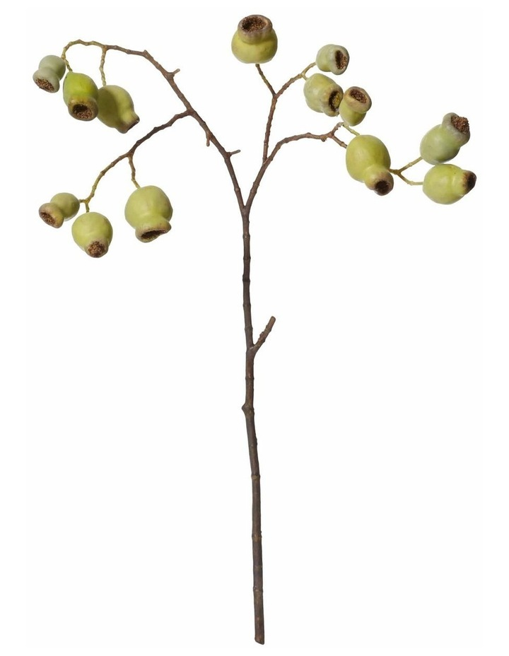 Gum Nut Stem Green 58cm image 1