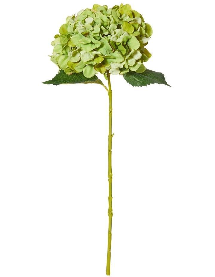 Hydrangea Stem Green image 1