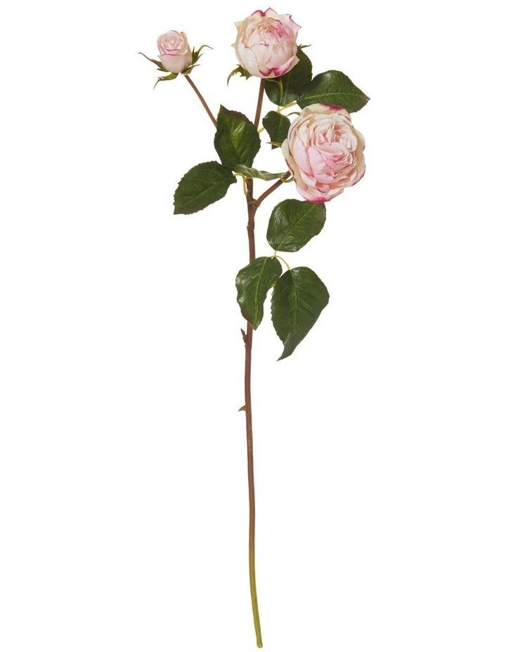 Ecuadorian Rose Spray Soft Pink image 1
