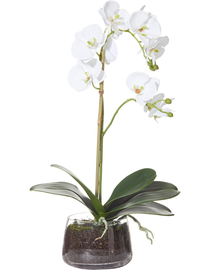 Garden Collection By Rogue Phalaenopsis-Classic Bowl White image 1
