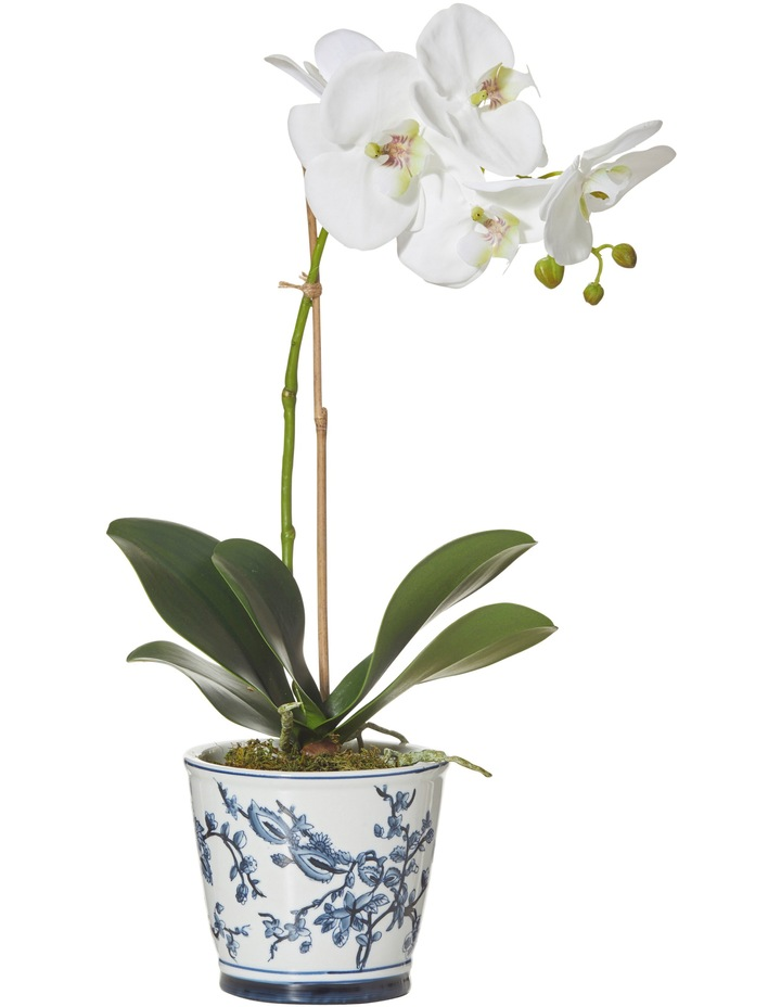 Garden Collection By Rogue Deluxe Phalaenopsis-Aaliyah Pot White/Blue image 1