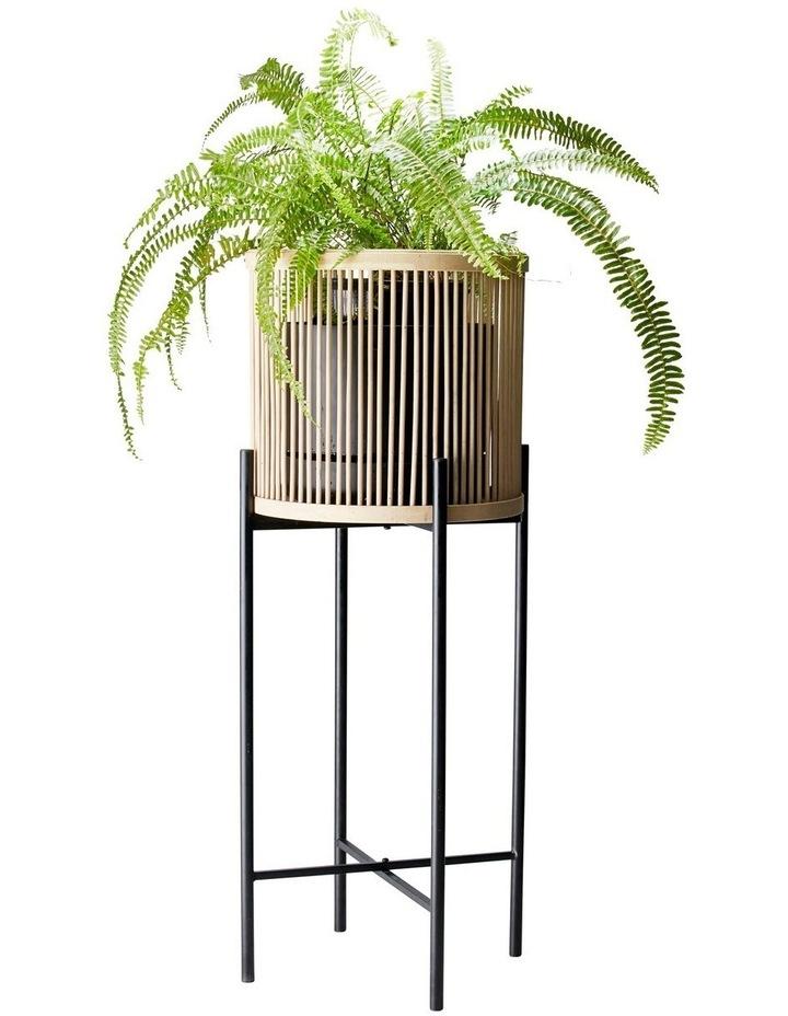 RHYTHM Plant Stand - Natural - 32x80cm image 2