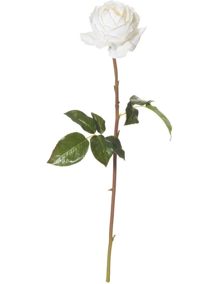 York Rose Stem White image 1