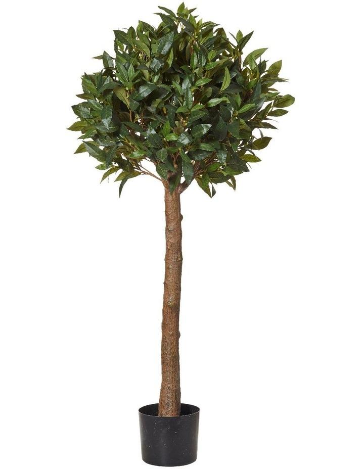 Sweet Bay Tall Ball Topiary image 1