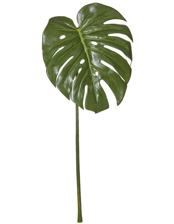 Monsteria Leaf 30x26x60cm image 1