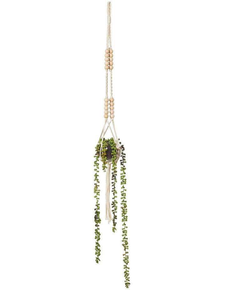 Hanging Succulents Sphere Vase 3 Assortment image 3