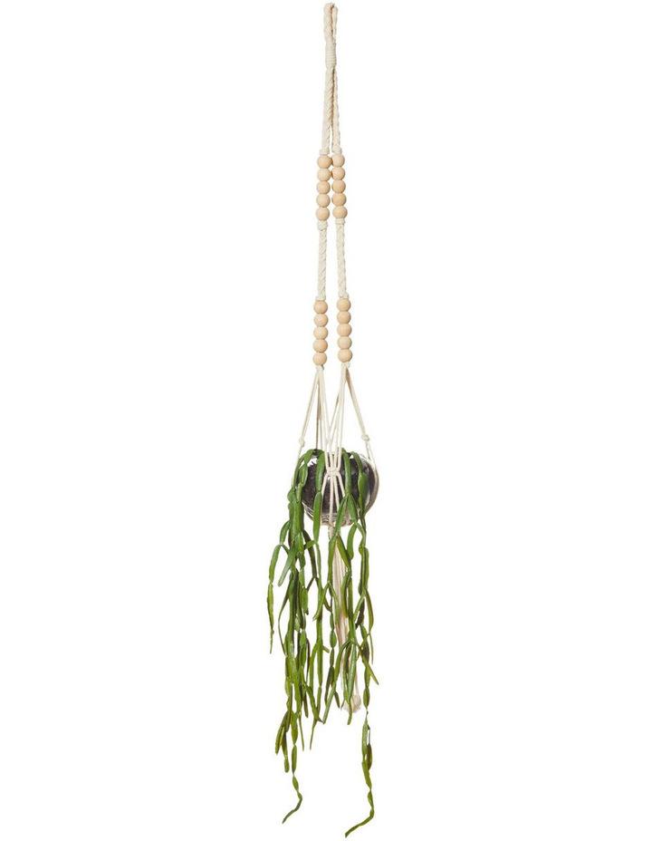 Hanging Succulents Sphere Vase 3 Assortment image 4
