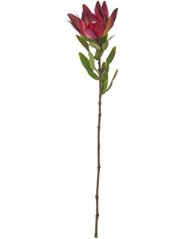 Protea Stem Red 10x10x58cm image 1