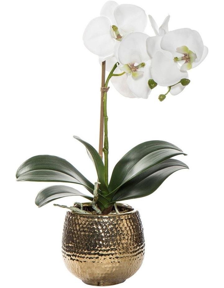 Deluxe Phalaenopsis in Cleo Pot White/Gold 25x19x40cm image 1
