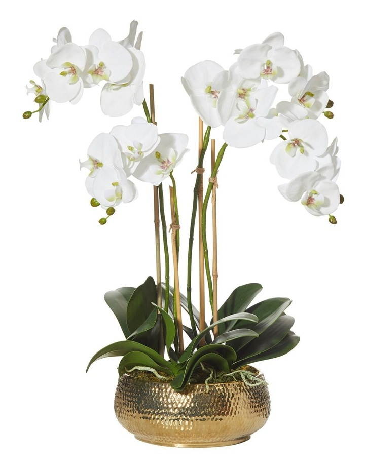 Deluxe Phalaenopsis in Kendall Bowl 46x41x62cm in White/Gold image 1