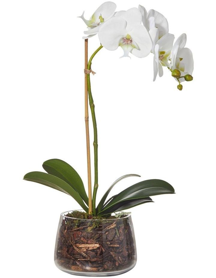 Phalaenopsis in Classic Bowl White 28x13x47cm image 1
