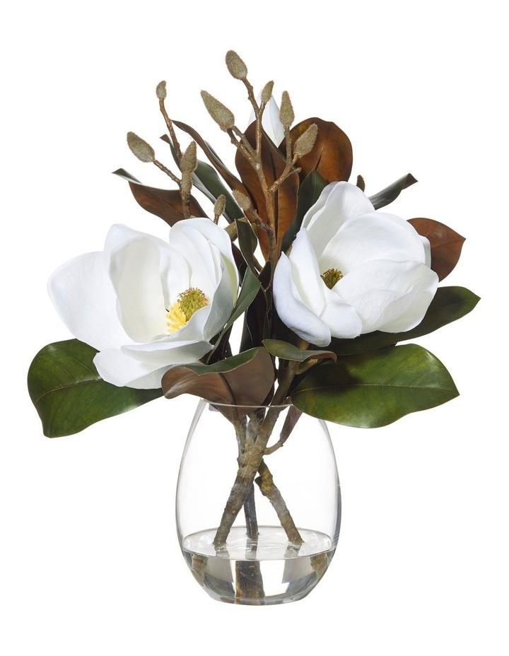 Magnolia in Claire Vase White 40x37x48cm image 1