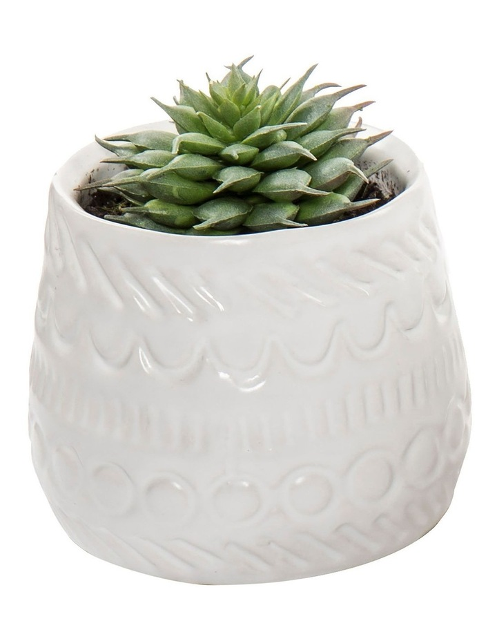 Echeveria Mix In Tully Pot - Design A image 1