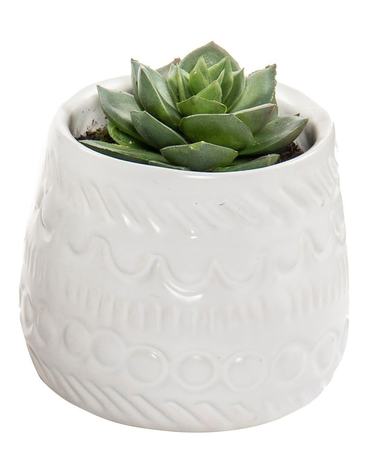 Echeveria Mix In Tully Pot - Design C image 1