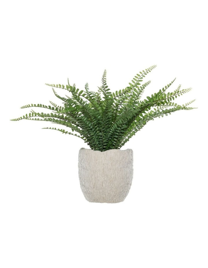 Rogue Fishbone Fern 37cm Green image 1