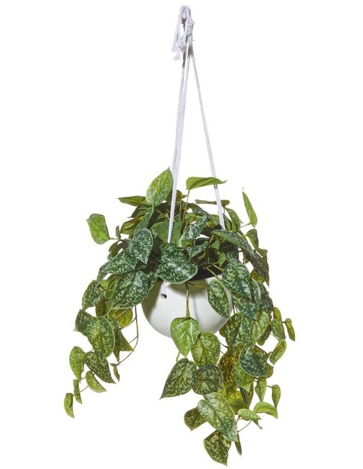 Hanging Aluminium Plant in Bowl Green/Cream 40x30x84cm image 1