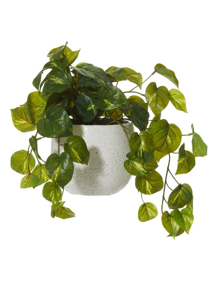 Hanging Pothos in Tub Pot Green/White 35x26x36cm image 1