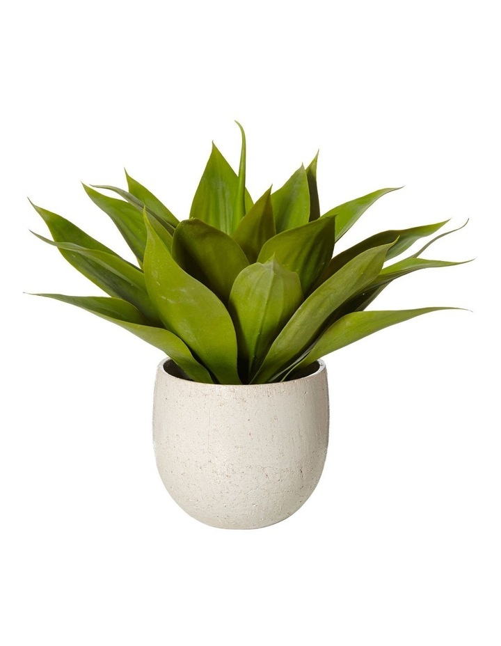 Agave in Tub Pot Green/White 55x55x48cm image 1