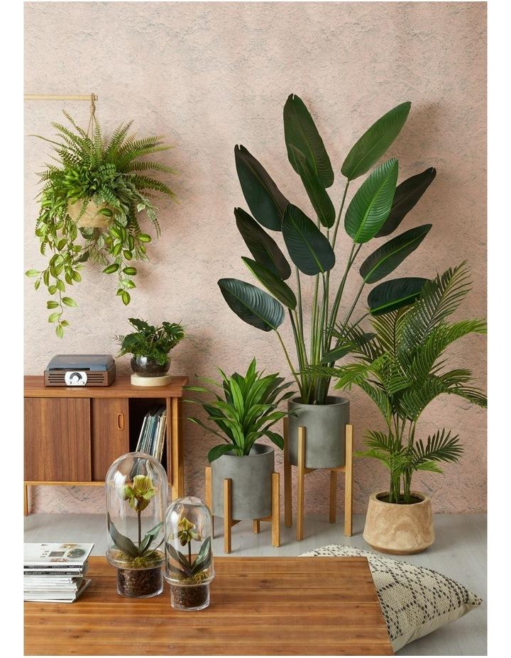 Areca Palm in Dansk Pot Green/Natural 100x100x137cm image 2