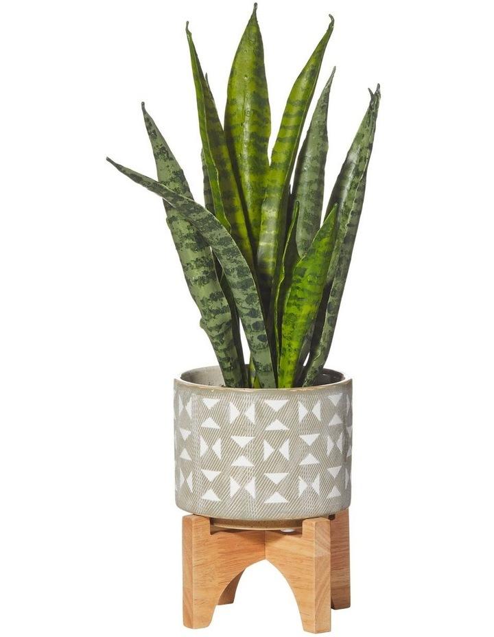Sanseveria in Hudson Pot Green/Grey 27x16x43cm image 1