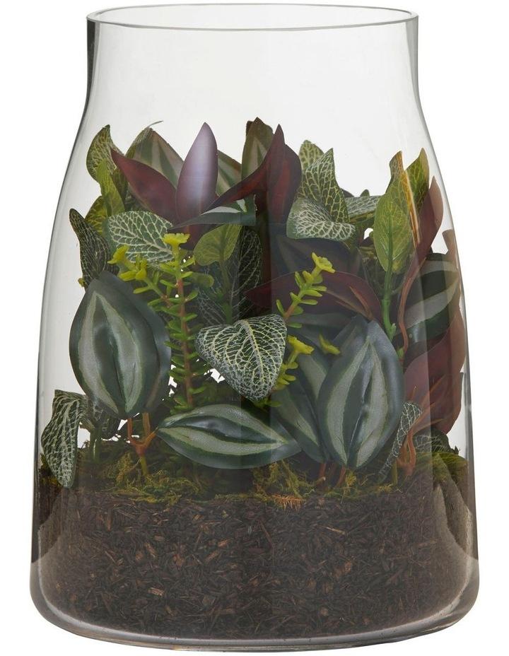 Fittonia Bush Mix in Stella Vase Green/Glass 20x20x26cm image 1