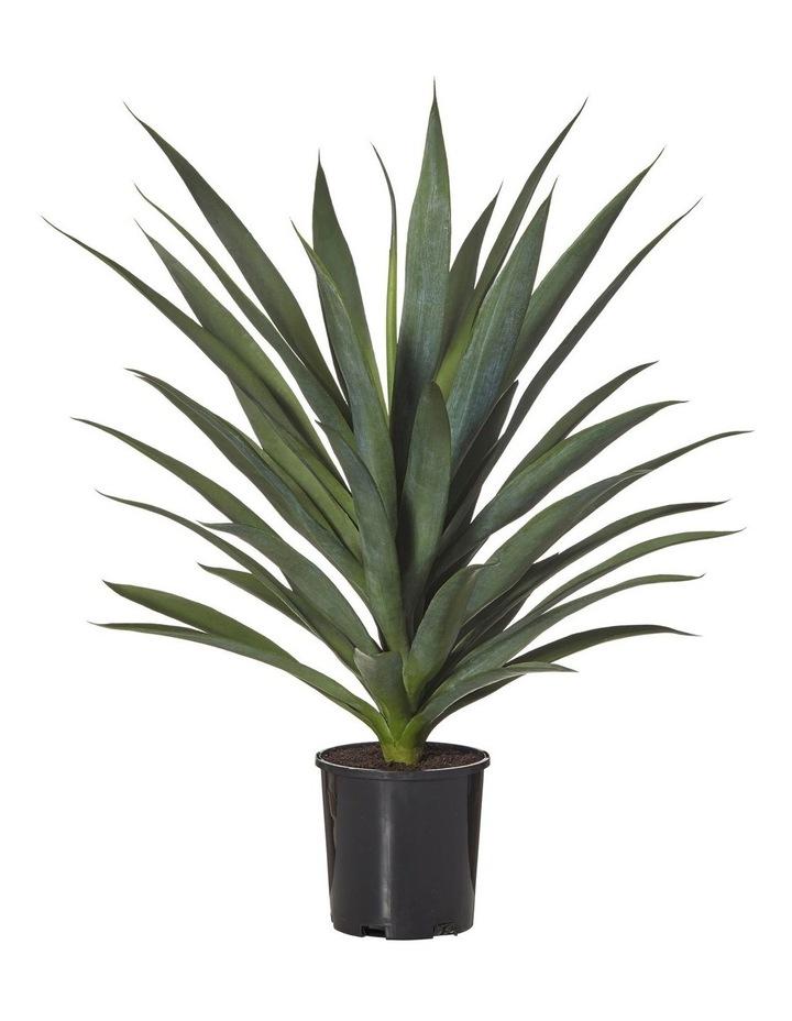 Yukka-Garden Pot image 1