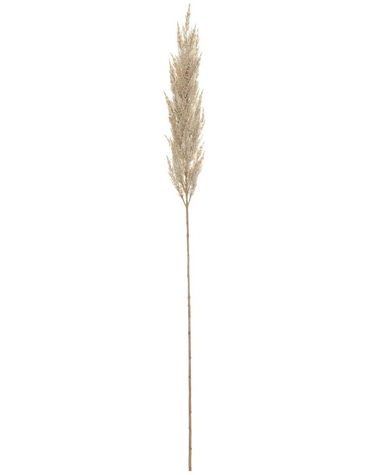 Pampas Grass Spray Cream 150cm image 1