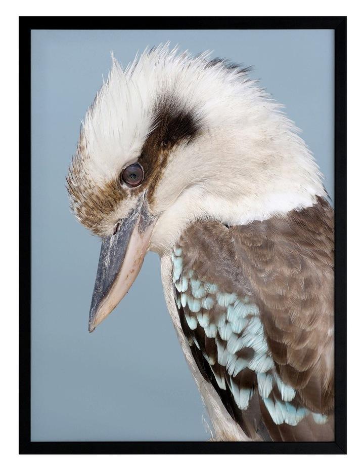 Kookaburra Black Frame image 1