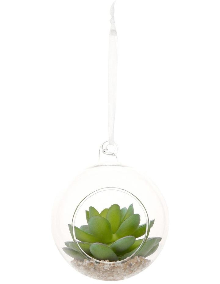 Eucalyptus Terrarium Bauble with Succulent Plant image 1