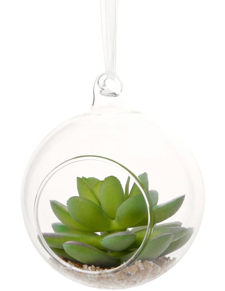Eucalyptus Terrarium Bauble with Succulent Plant image 2