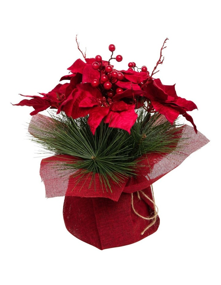 Heirloom Potted Christmas Poinsettia with Pine Detail image 1