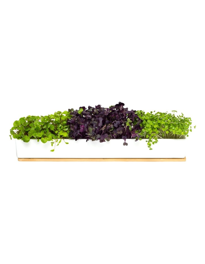 Windowsill Microgreens Grow Kit image 2