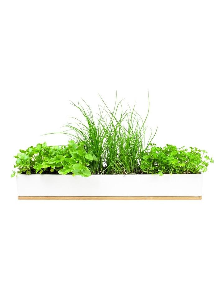Micro Herbs Grow Kit image 2