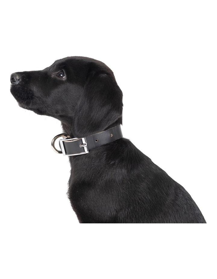 Genuine Leather Collar Black Small image 3