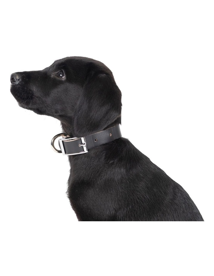 Genuine Leather Collar Black Medium image 3