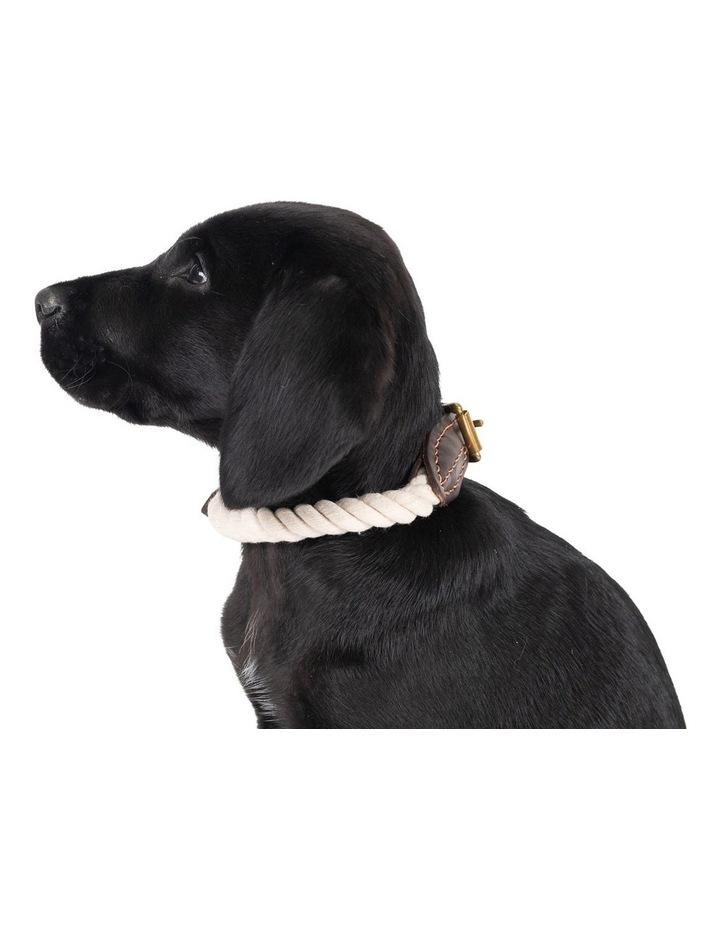Genuine Leather & Brass Rope Collar Natural Small image 3